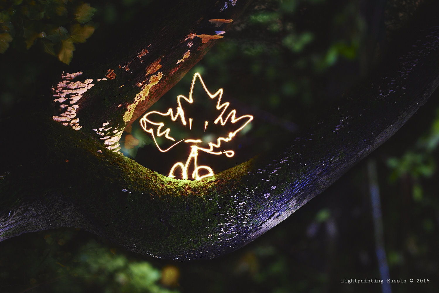 Light painting Autumn - листик